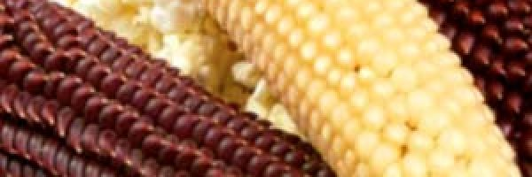 kukuruza-pop-korn